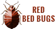 Red Bed Bugs